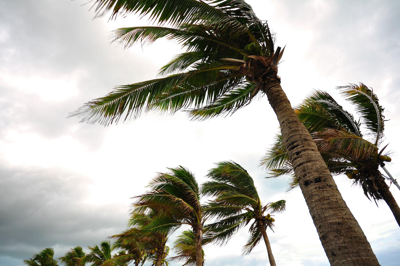 Wind Damage Claims